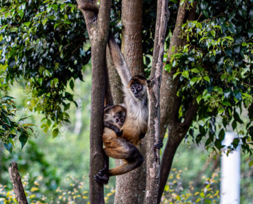 Mother and Children Monkey Climbing