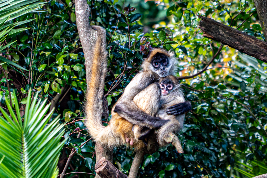 Mother and Child Monkey