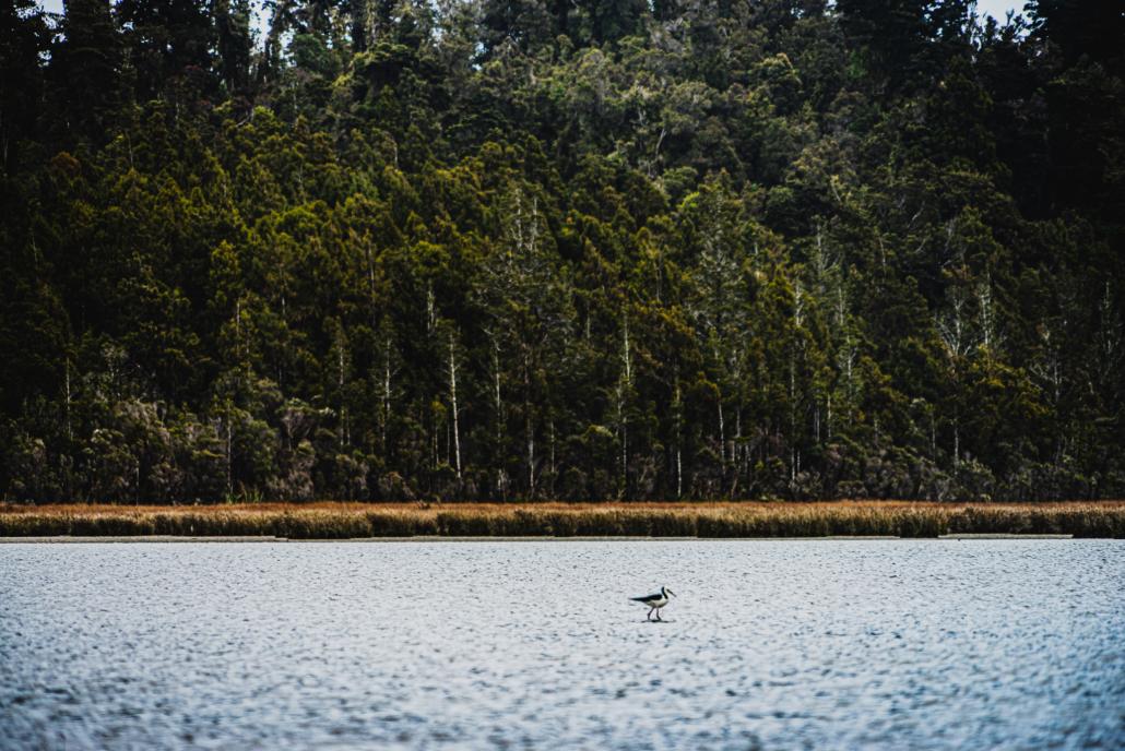 Abel Tasman Bird