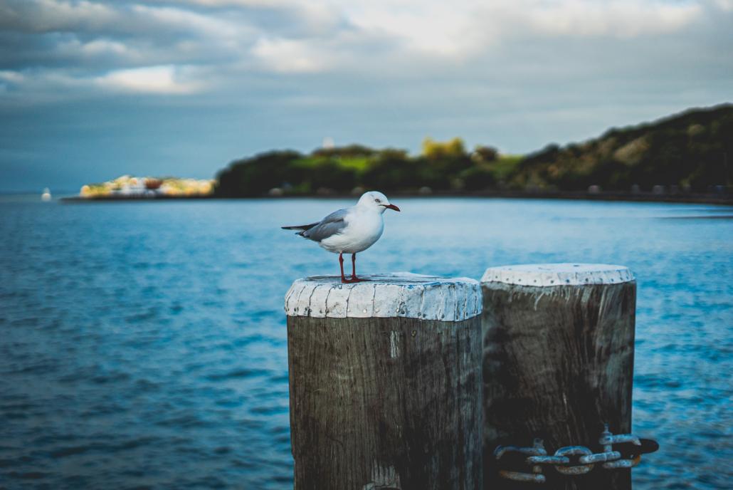 Mission Beach Bird