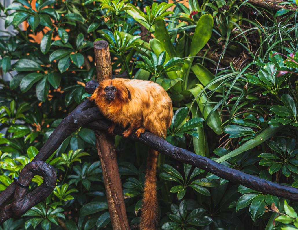 Orange Monkey Sitting
